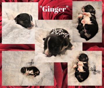 """""""Ginger"""""""