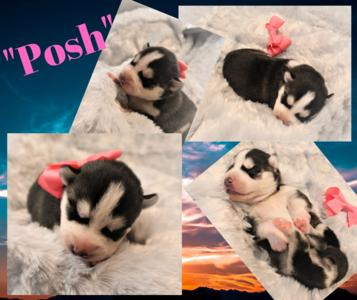 """""""Posh"""""""